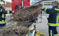 Neues Storchennest in Oberpullendorf